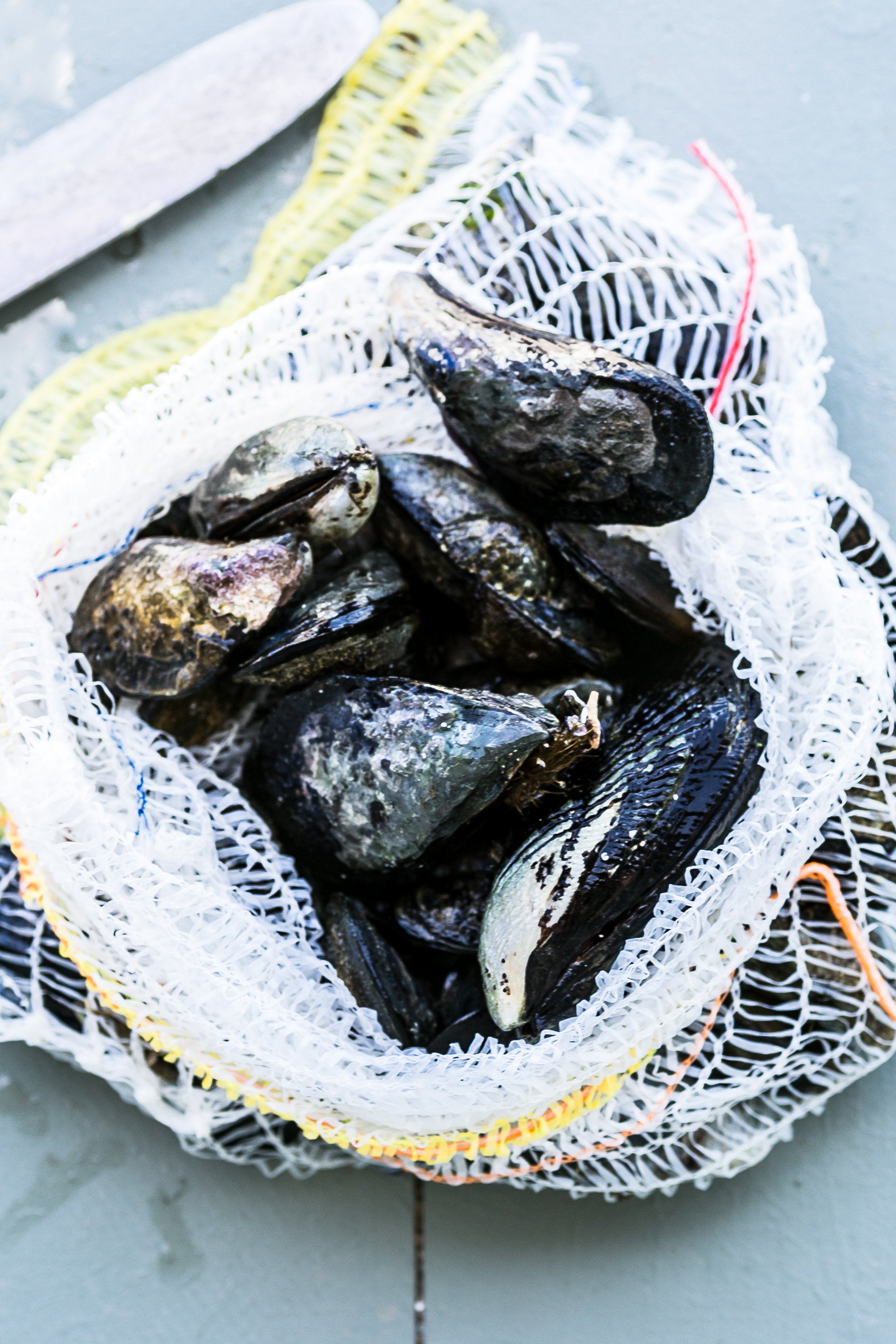 Black Atlantic Mussels in White Wine